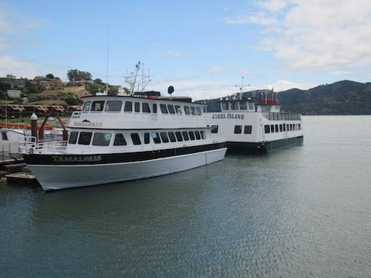 Tamalpais Fleet
